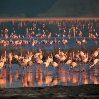 Lake_Manyara_NationalPark.jpg