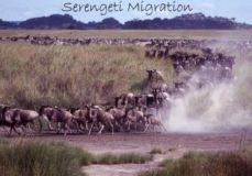 Serengeti_Migration.jpg