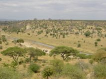 Tarangire_National_Park_wikipedia.jpg